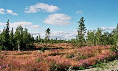 Zdjecie SZWECJA / brak / okolice Stromsund / Kolorowe dywany