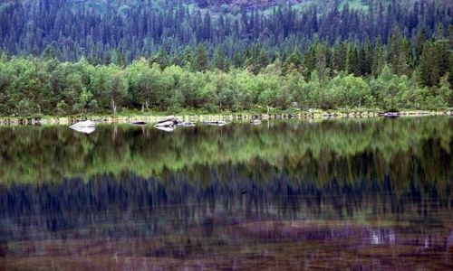 Zdjecie SZWECJA / Lappland / na Kungsleden przed Kvikkjokk / lustrzane odbicie