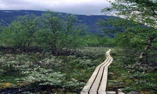 SZWECJA / Lappland / Park Narodowy Abisko / w ochronie roślinności