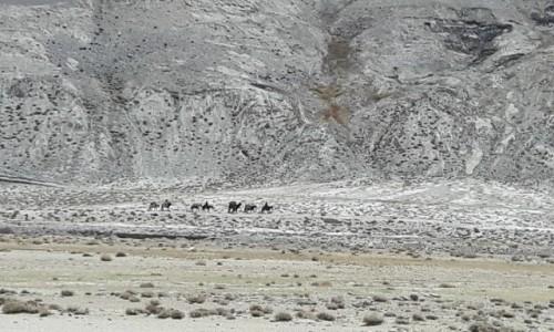 Zdjecie TADŻYKISTAN / Tadzykistan / Tadżykistan / fot1