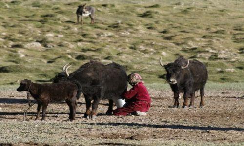 Zdjęcie TADŻYKISTAN / brak / Tadżykistan / Jaki