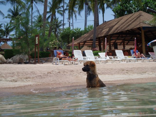 Zdjęcia: Wyspa Ko Tao, Ale mi gorąco, TAJLANDIA