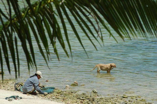 Zdjęcia: Haad Salad, Koh Phangan, Zbieraczka Muszli, TAJLANDIA