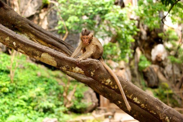 Zdjęcia: Monkey Caves, Phuket, Widzisz mnie? (Thailand), TAJLANDIA