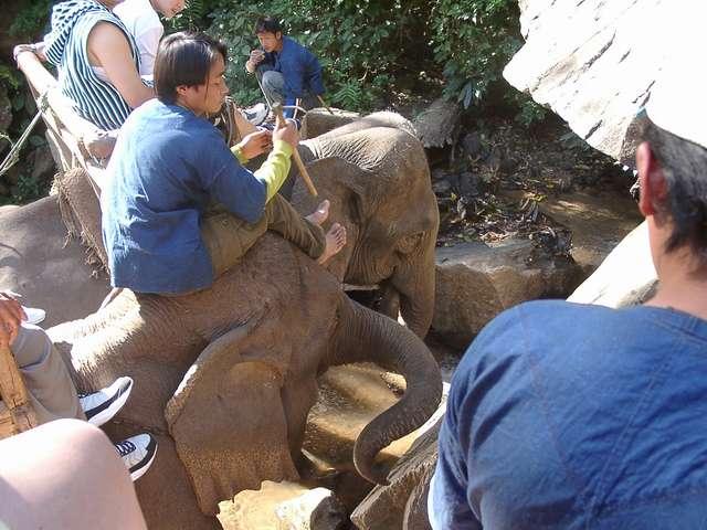 Zdjęcia: Chiang Mai, Na słoniach przez dżunglę, TAJLANDIA