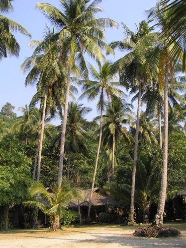Zdjęcia: lonely beach, ko chang, tak sie mieszka:), TAJLANDIA