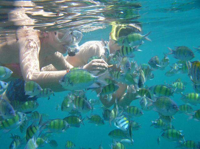 Zdjęcia: Maya Bay, Ko Phi Phi Lay, przyjazne rybki, TAJLANDIA