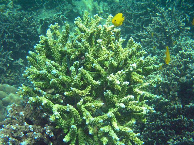 Zdjęcia: Maya Bay, Ko Phi Phi Lay, rafa1, TAJLANDIA