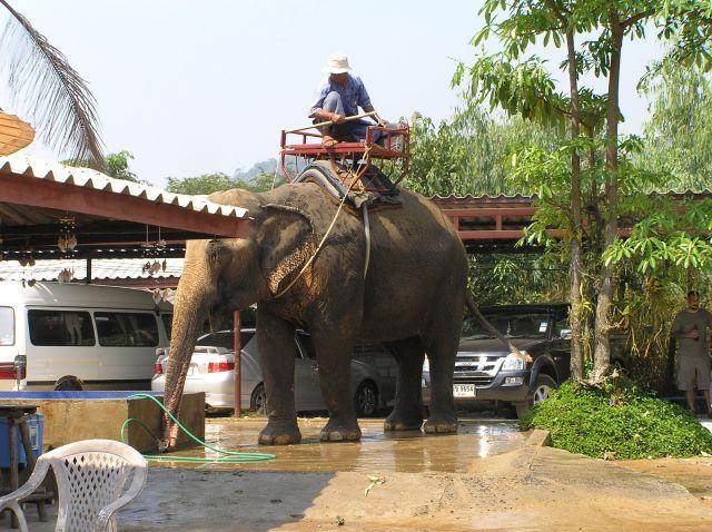 Zdjęcia: słoniarnia, Ko Chang, myjnia:), TAJLANDIA