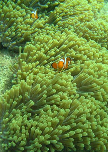 Zdjęcia: Maya Bay, Ko Phi Phi Lay, nemo, TAJLANDIA