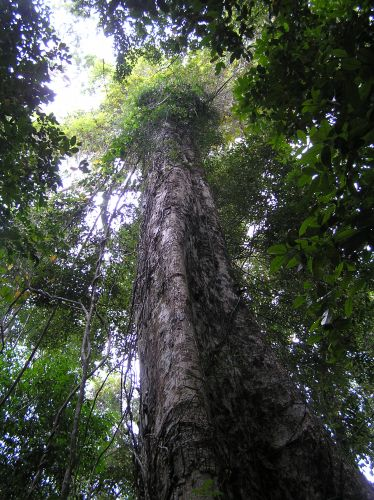 Zdjęcia: las deszczowy, ko chang, drzewko, TAJLANDIA