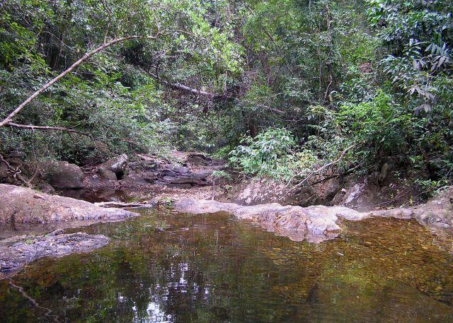 Zdjęcia: las deszczowy, ko chang, w głębi wyspy, TAJLANDIA