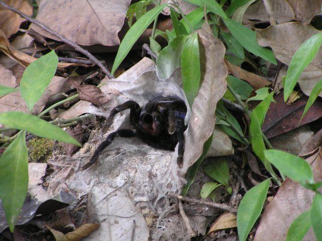 Zdjęcia: las deszczowy, ko chang, pajączek, TAJLANDIA