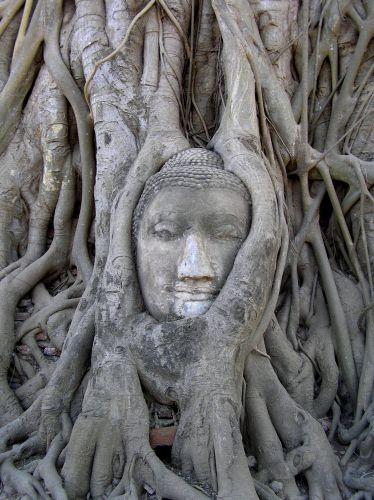 Zdjęcia:  Wat Phra Mahathat, Ajutthaja, święta głowa, TAJLANDIA