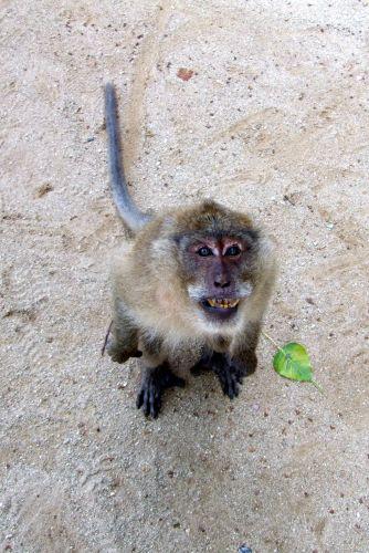 Zdj�cia: Phuket, Phuket, Daj jeszcze jednego bananka....prosze..., TAJLANDIA