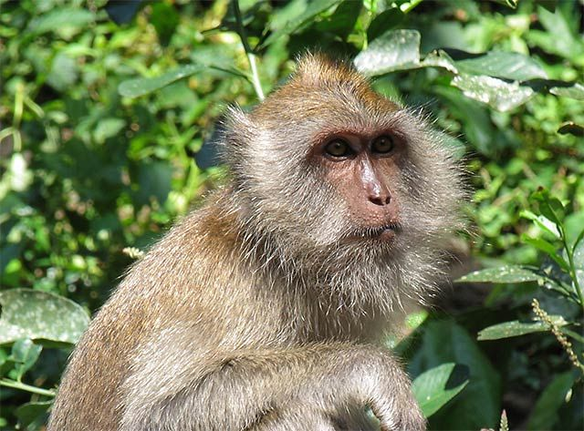 Zdjęcia: Wyspa James'a Bonda, Wyspa James'a Bonda, małpka, TAJLANDIA