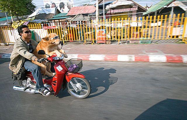 Zdjęcia: CHIANG MAI Migawki z ulicy, Fotka 7, TAJLANDIA
