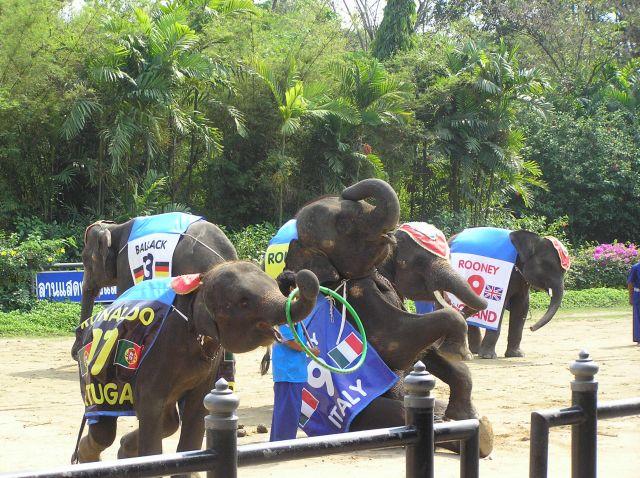 Zdjęcia: na południe od Bangoku, rozdokazywane słoniątka, TAJLANDIA