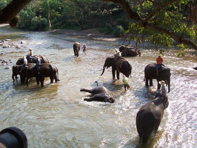 Zdjęcia: na północ od Chiang Mai, północ Tajlandii, poranne ablucje słoni, TAJLANDIA
