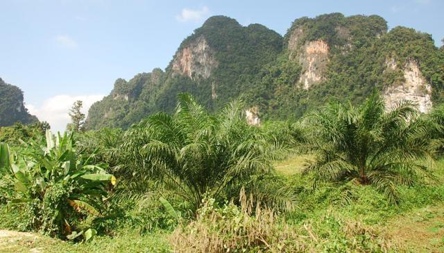 Zdjęcia: Ao Nang, Krabi, Gdzieś po drodze, TAJLANDIA