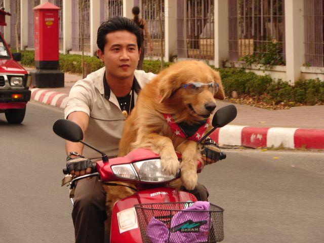 Zdj�cia: Chiang Mai, Easy Rider, TAJLANDIA