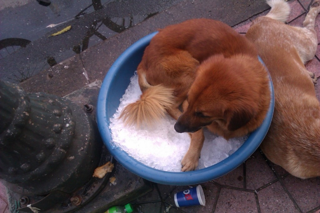 Zdjęcia: miska z lodem, Bangkok, Cold dog, TAJLANDIA