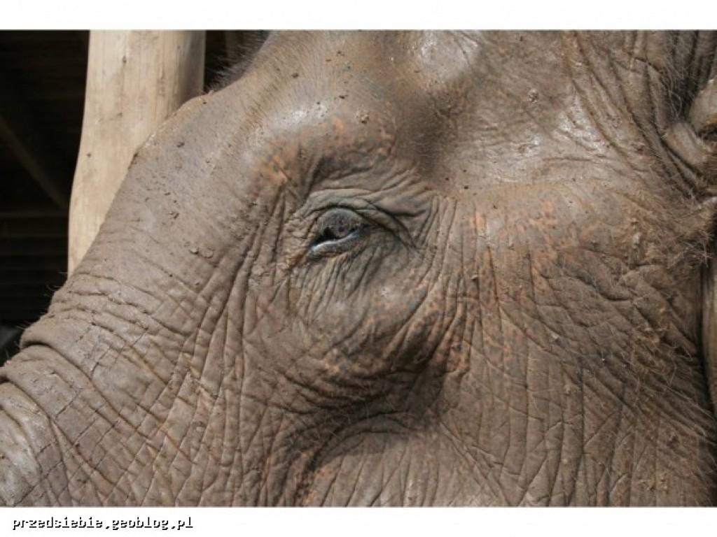 Zdjęcia: Elephant Nature Park, Elephant Nature Park, TAJLANDIA