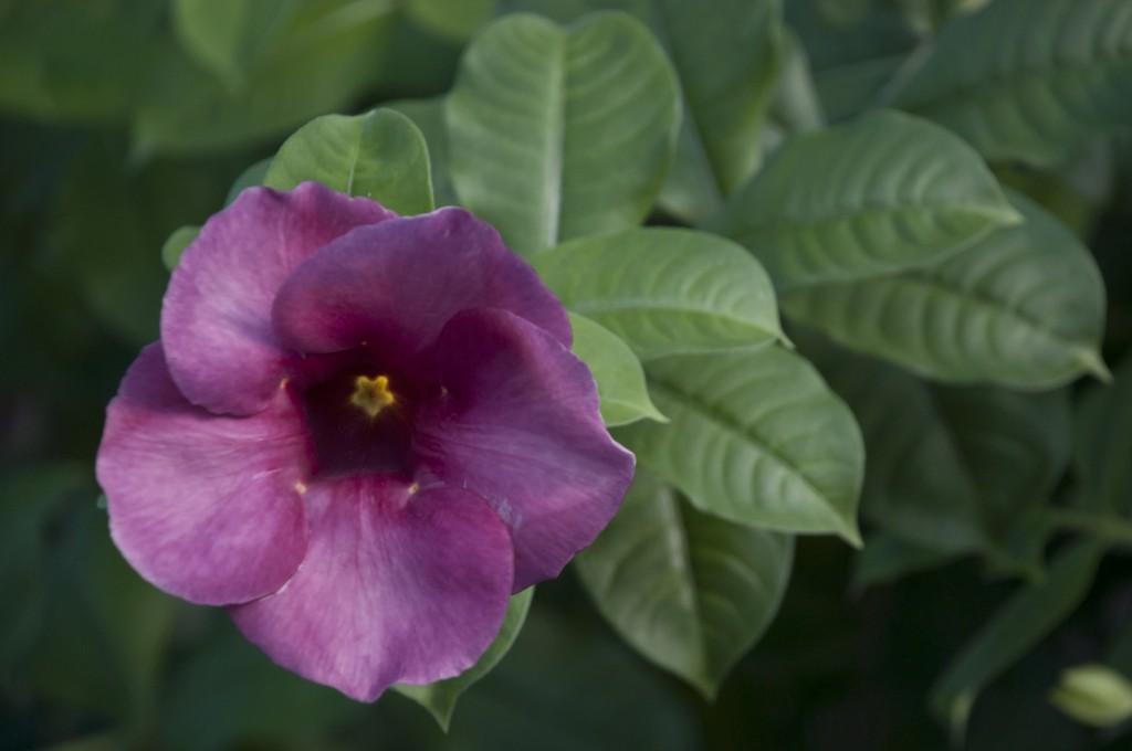 Zdjęcia: Kanchanaburi, Kanchanaburi, Kwiatuszek przy ulicy ;), TAJLANDIA