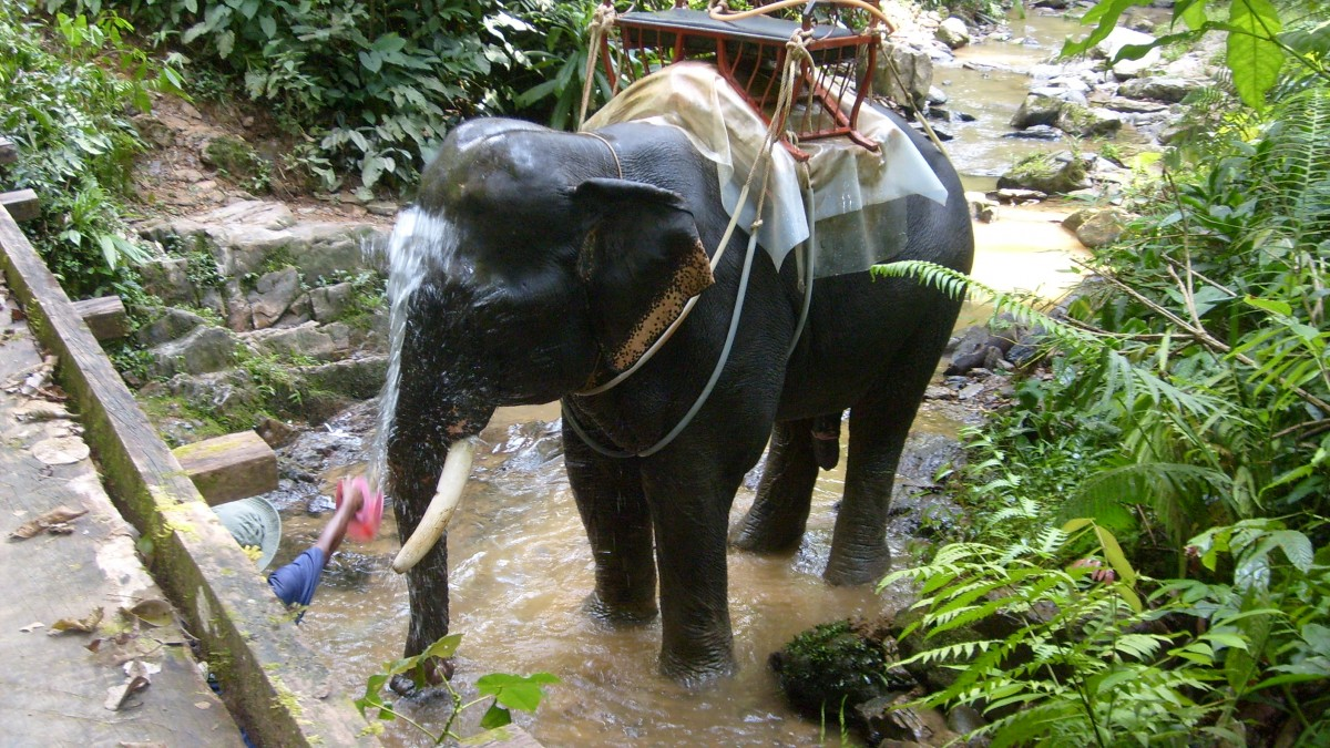 Zdjęcia: Tajlandia, Tajlandia, Czas na kąpiel, TAJLANDIA