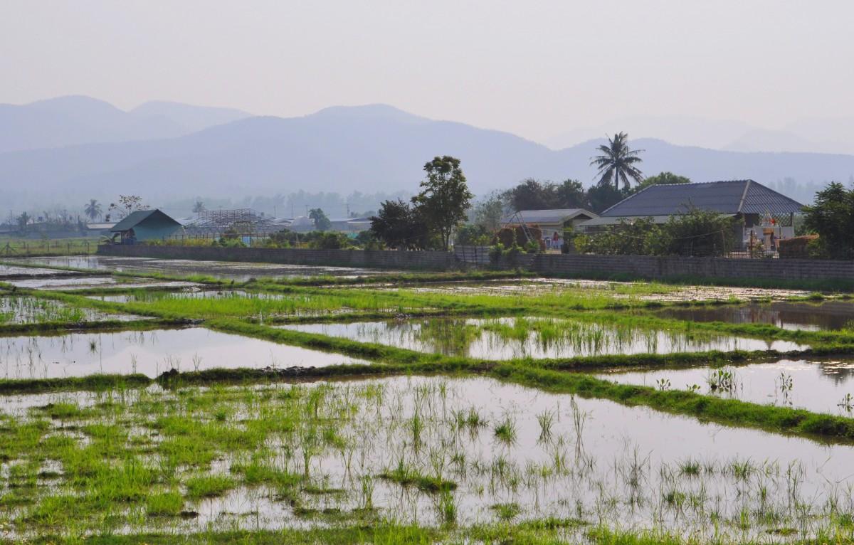 Zdjęcia: gdzieś po drodze, północ, Pola ryżowe, TAJLANDIA