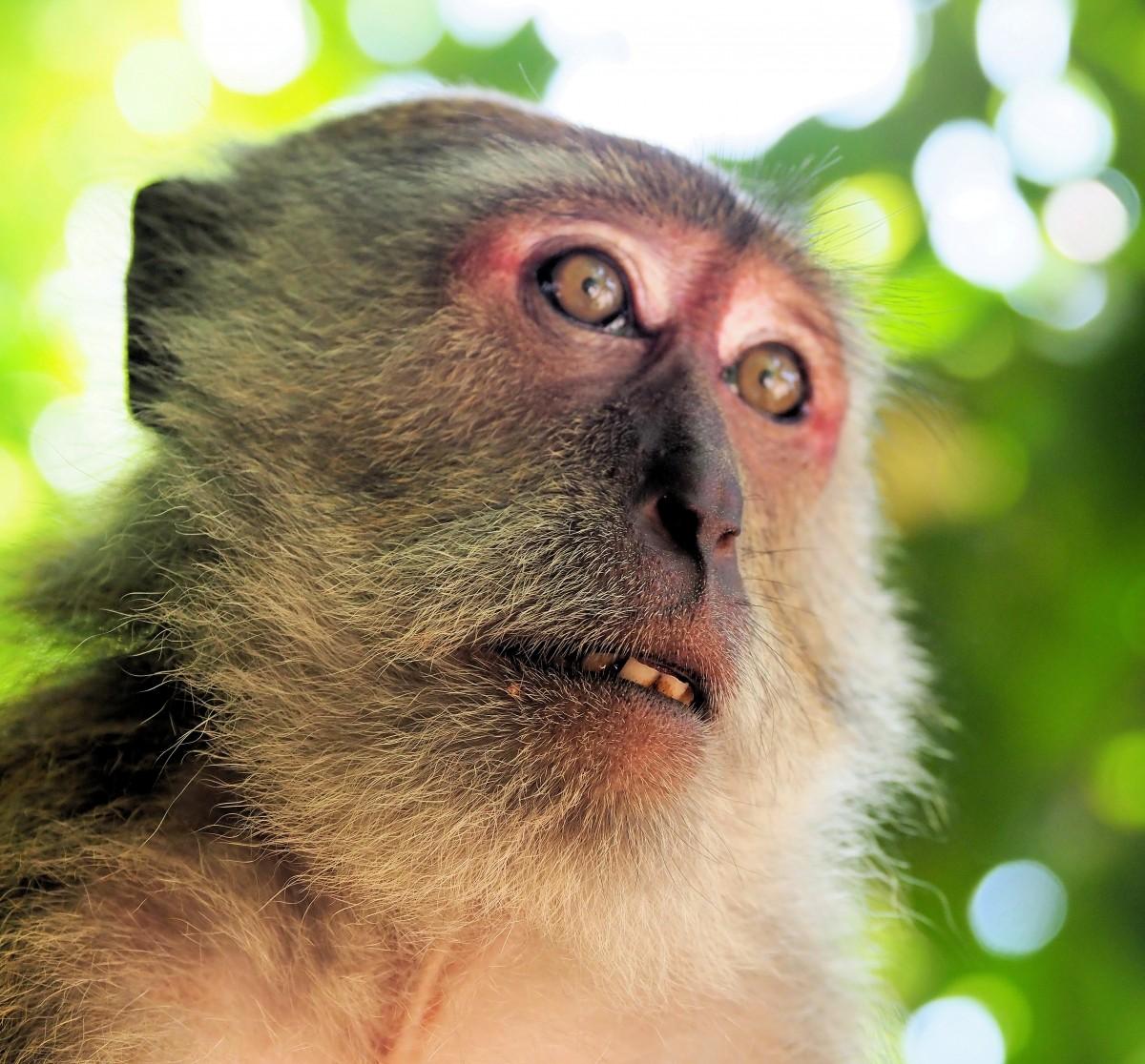 Zdjęcia: Zatoka Krabi, KRABI, Małpi ród-4, TAJLANDIA