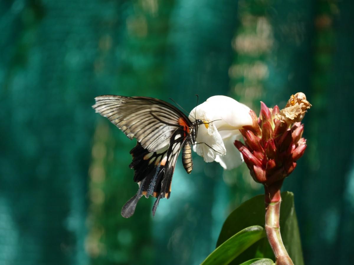 Zdjęcia: Koh Lanta, Krabi, W locie, TAJLANDIA