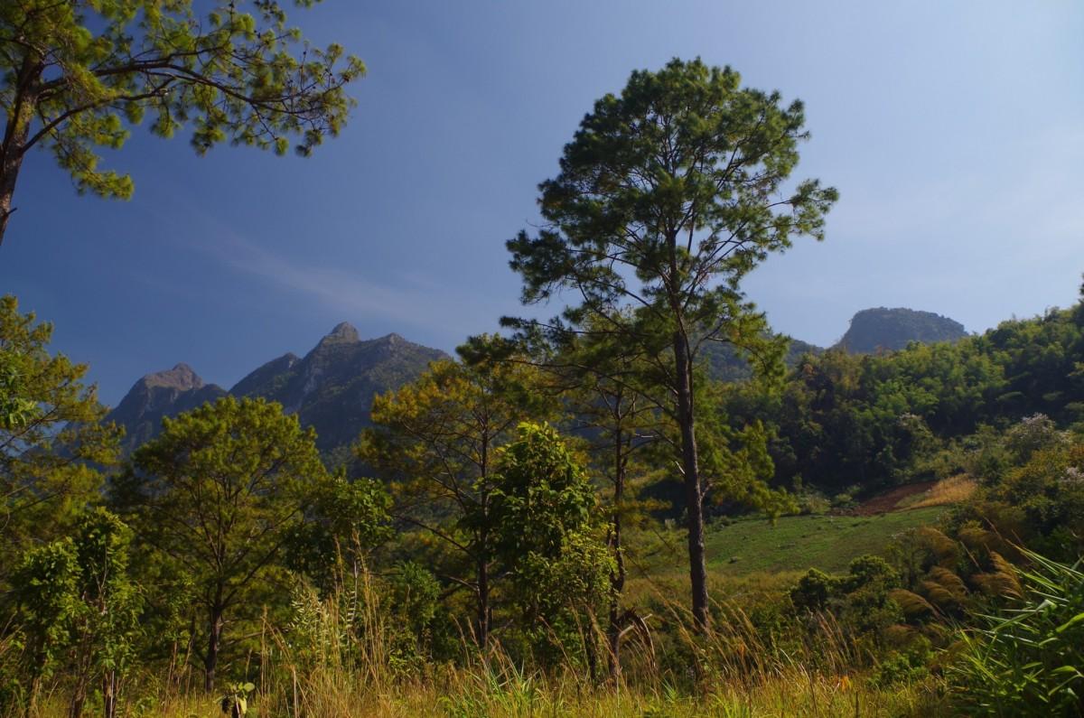 Zdjęcia: Baan View Doi Luang Chiang Dao, Północna Tajlandia, Trochę jak w Polsce, TAJLANDIA