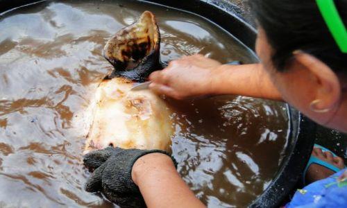 Zdjecie TAJLANDIA / - / Kanchanaburi  / Wiejska kuchnia polowa