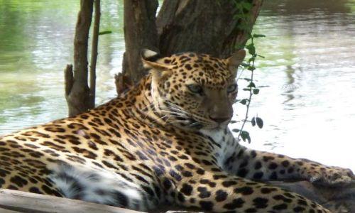 Zdjecie TAJLANDIA / Kanchanaburi / safari -zoo / Lampart