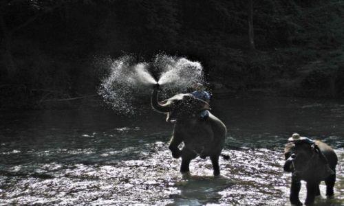 Zdjecie TAJLANDIA / Chaing Mai / Chaing Mai / Kąpiel słoni