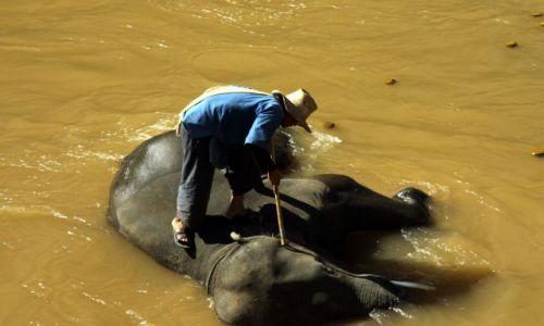Zdjęcie TAJLANDIA / okolice Chiang Mai / rzeka :) / Rodeo w stylu azjatyckim :)