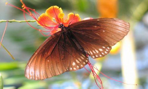 Zdjęcie TAJLANDIA / okolice Chiang Mai / Motylowo / Motyl, ale nie wiem z jakiego gatunku