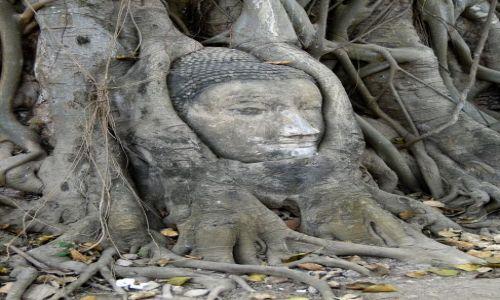Zdjecie TAJLANDIA / - / Ayutthaya / Budda