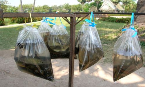 Zdjecie TAJLANDIA / - / Sukhothai / Zbieranie dobrych uczynków