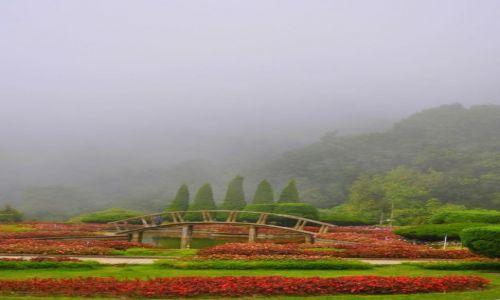Zdjęcie TAJLANDIA / Złoty trójkąt / Chiang Rai / We mgle ...