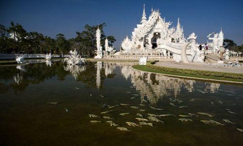 Zdjecie TAJLANDIA / Chiang Rai / Wat Rong Kuhn / rybki tez biale