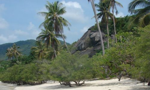 Zdjecie TAJLANDIA / Koh Pangan / plaża / plaża