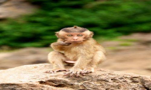Zdjecie TAJLANDIA / Phuket / Monkey Caves / Ciekawosc i zafrasowanie (Thailand)