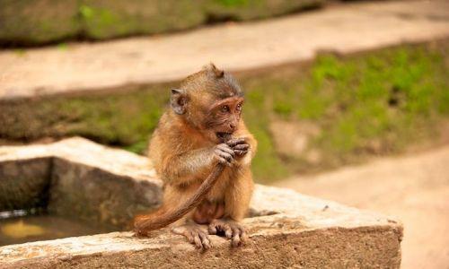Zdjecie TAJLANDIA / Phuket / Monkey Caves / Musze cos pocycac... (Thailand)