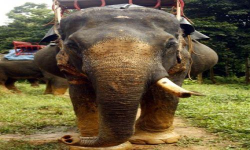 Zdjęcie TAJLANDIA / Khao Sok / Dżugla / White elephant