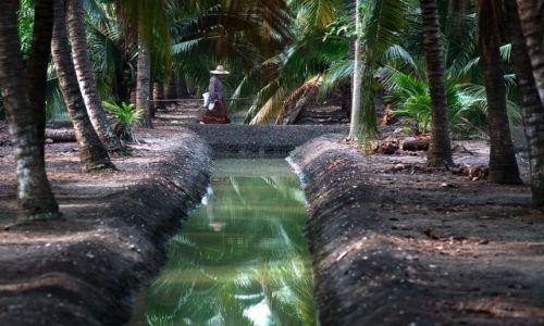 Zdjęcie TAJLANDIA / Damnoen Saduak / Damnoen Saduak / w palmowym gaju