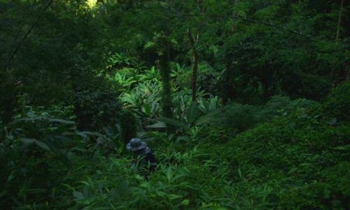 Zdjęcie TAJLANDIA / prowincja Chiang Mai / Dżungla / Znajdź przewodnika.