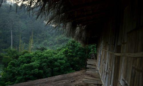 Zdjecie TAJLANDIA / prowincja Chiang Mai / Dżungla / Chatka w dżunglii