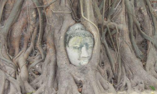Zdjęcie TAJLANDIA / Ayutthaya / Ayutthaya / Buddha